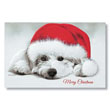 Christmas Puppy Holiday Card