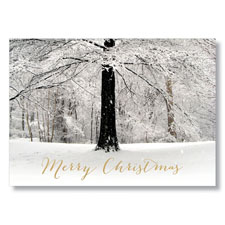 Picture of Christmas Winter Forest Holiday Card